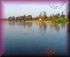 Gosfield Lake