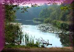 Wake Valley & Pond
