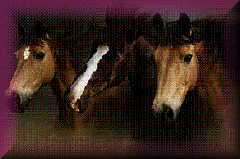 Essex Horse & Pony Protection