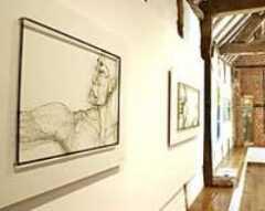 Galanthus Gallery