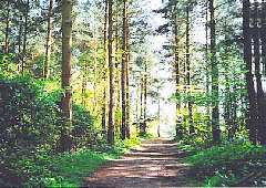 Queenswood Country Park
