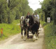 Memory Lane                               Horse Driven Tours