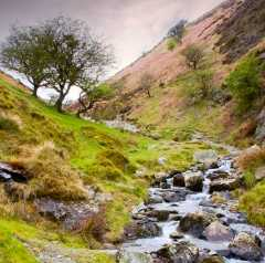 Carding Mill