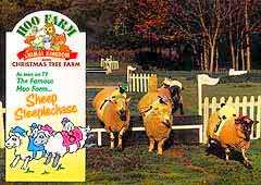 Hoo Farm