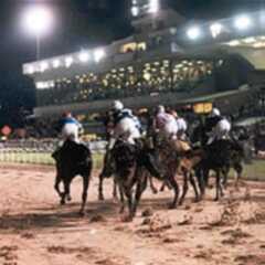 Wolverhampton Races